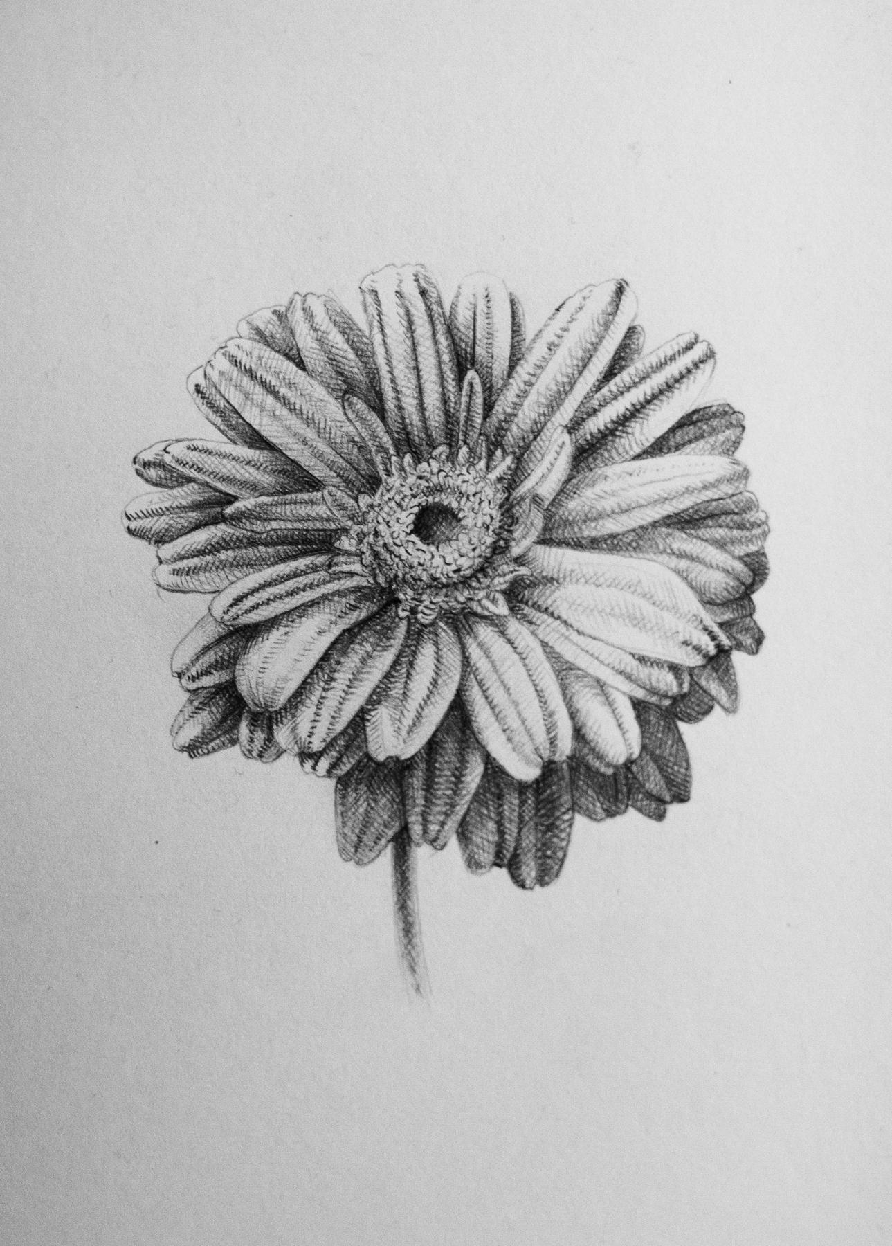 Kati Kolny Art Blog